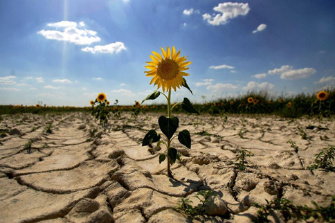 国家公务员考试申论热点:防治土地荒漠化